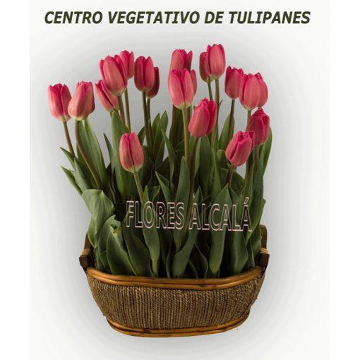 Centro Vegetativo de tulipanes  y verdes de temporada